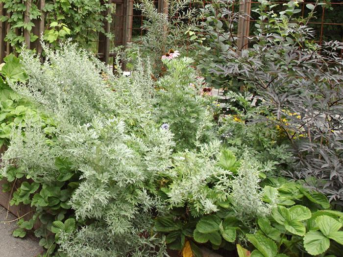 Grönskande örtagård vid Spritmuseum