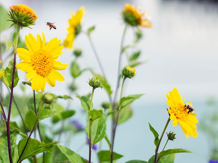 Blommor med bin